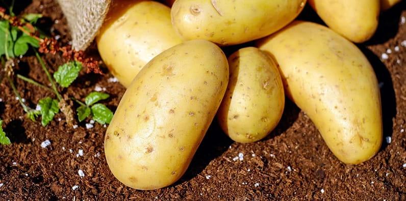 Unas patatas en el suelo.